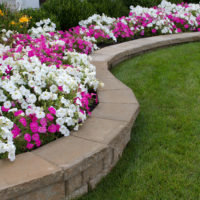 ANNUALS VS PERENNIALS – WHICH IS RIGHT FOR YOU?